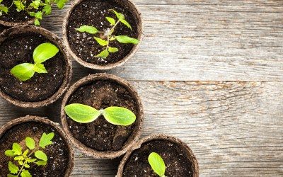 The Ultimate Guide of When to Sow and Plant Seeds