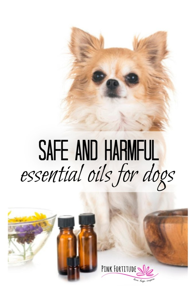 You love your Essential Oils. But are they safe for dogs? Yes and no. They can be therapeutic or extremely toxic. Read on to learn about the precautions you should take when using EOs around your dog, and also a list of both safe and harmful Essential Oils for dogs.