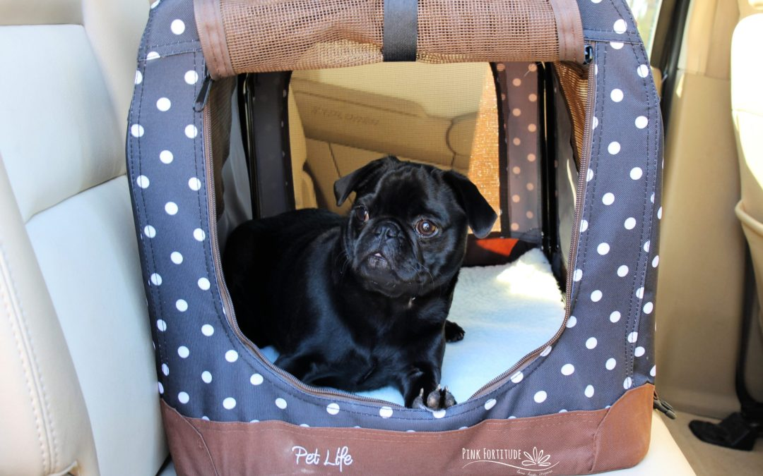 15 Must-Have Accessories When You Travel with Your Dog