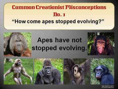 How come apes stopped evolving?