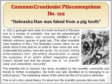 Nebraska Man was faced from a pig tooth.