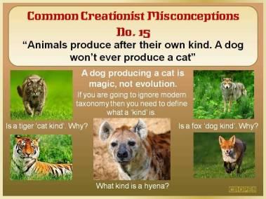 A dog won't ever produce a cat.