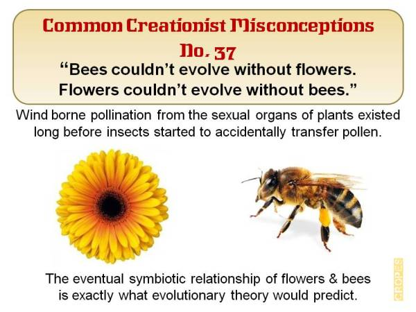 Bees couldn't evolve without flowers. Flowers couldn't evolve without bees.
