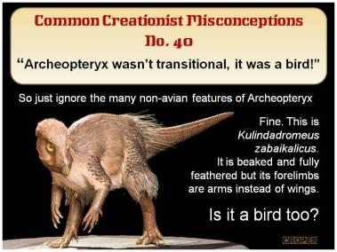 Archeopteryx wasn't transitional, it was a bird.