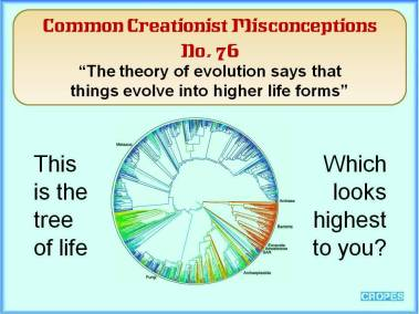 The theory of evolution says that things evolve into higher life forms.