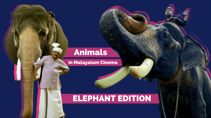 Animals in Malayalam Cinema Elephants