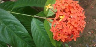 Kerala pet plants