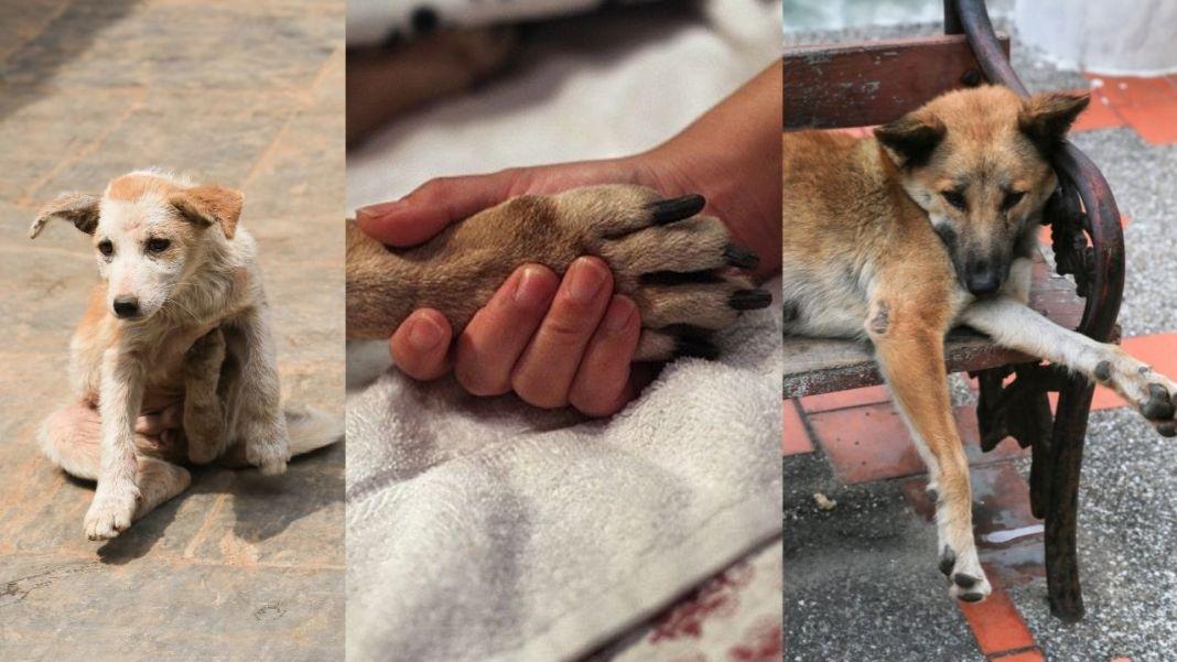 Dog Abuse In Kerala