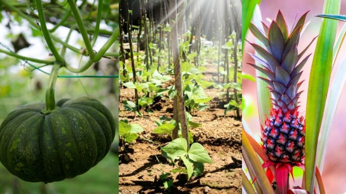 Can 'Organic Theatre' Revive The Culture Of Organic Farming?