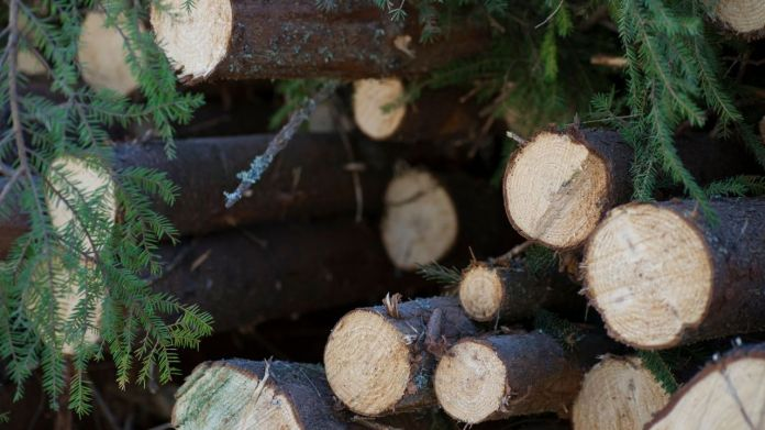 How A Paralysed Man Established A Multi-crore Timber Business