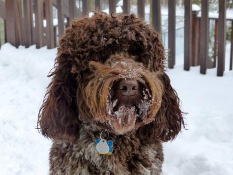 Truffle Snow