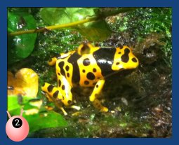 yellow and black frog at Birmingham National Sea Life Centre