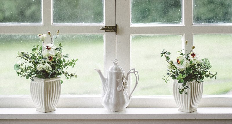 house plants in the window