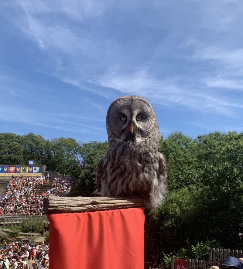 owl during Le Bal des Oiseaux Fantomes show at Puy du Fou France