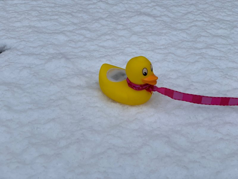 duck thermometer in the snow