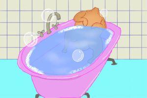 Chicken in a bathtub