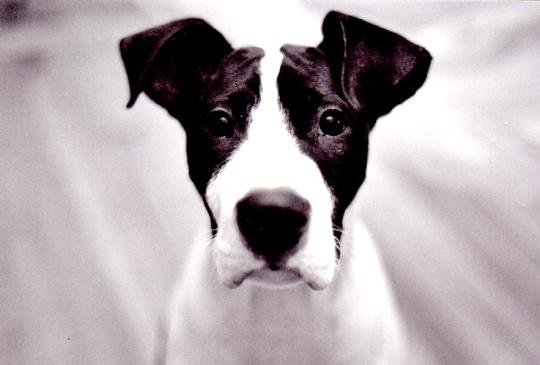 Dog, Paco by aixa (bouddha3)