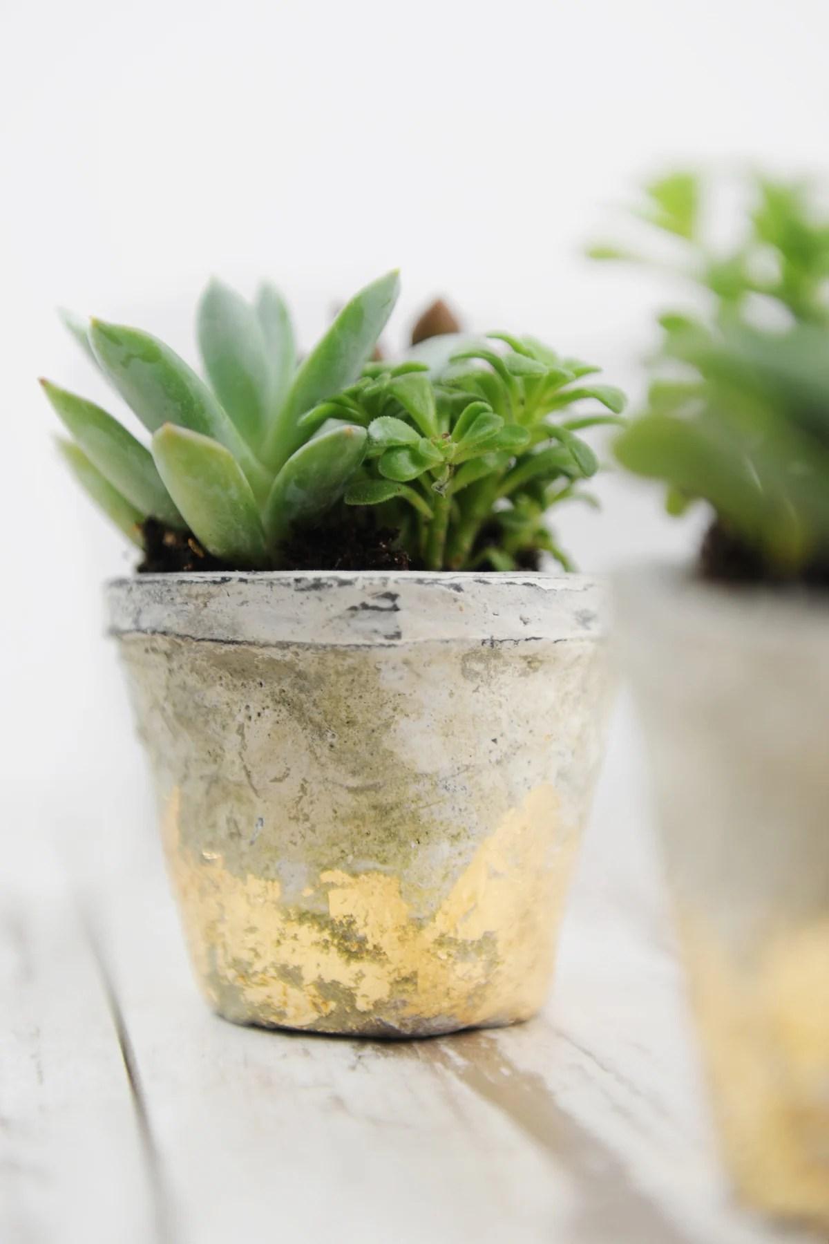 Rustic Gold Leaf DIY Succulent Pots