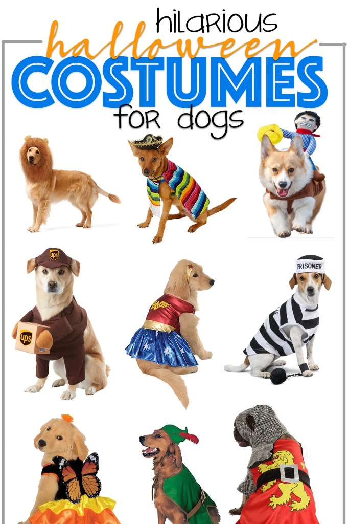 Cutest Halloween Costumes for Dogs