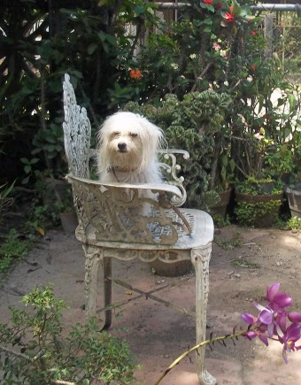 Princess on her favorie chair