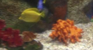 Orange under the sea