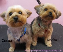 Japanese Style Dog Grooming in Torrance www.PinkPucciDogGrooming.com