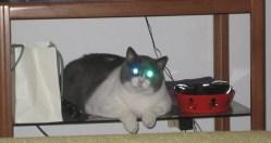 Fat Cat Pet Love