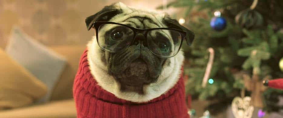 Gizmo The Pug: A Heartwarming Christmas Video