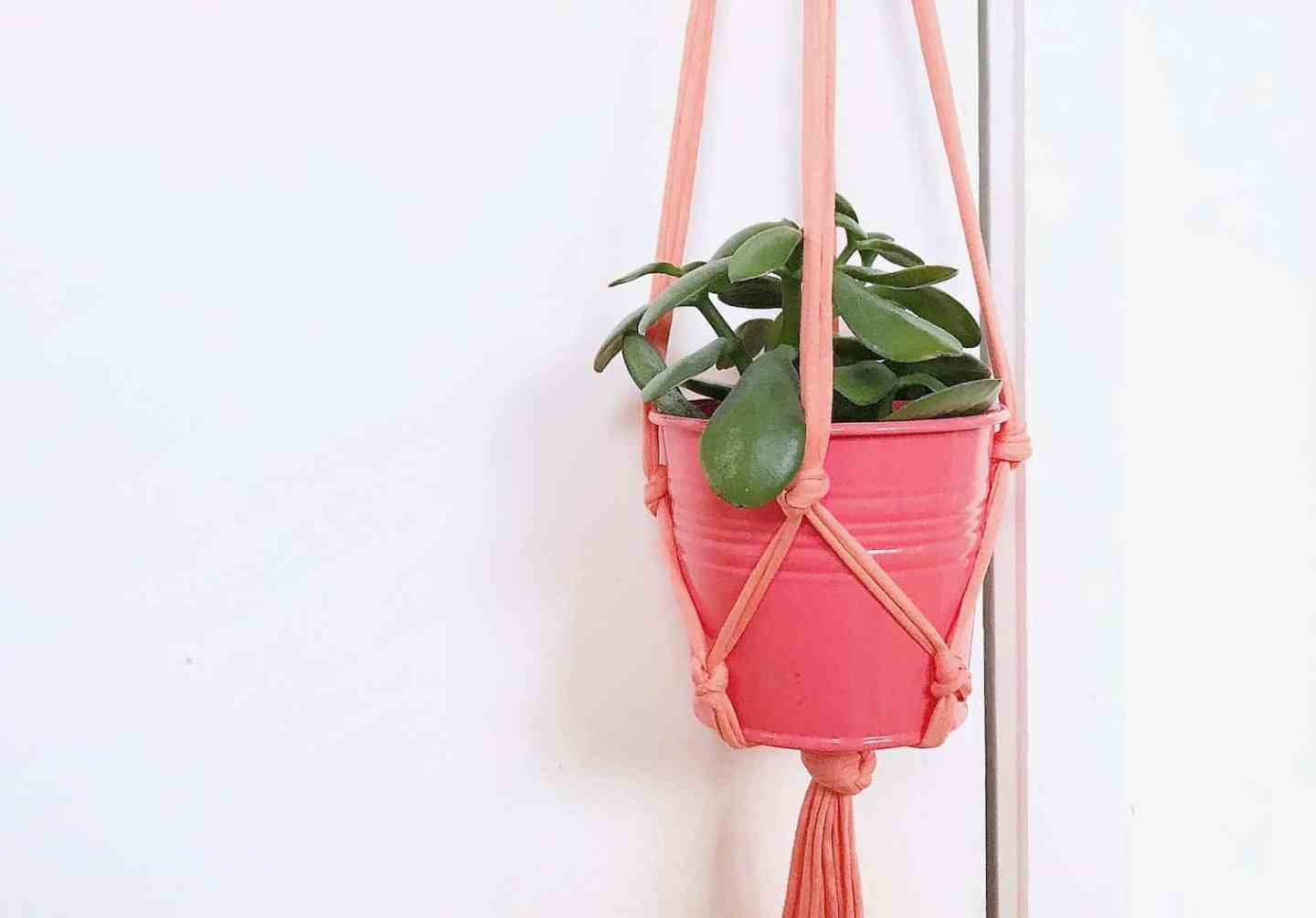 Ten Minutes To Make A Macrame Plant Hanger
