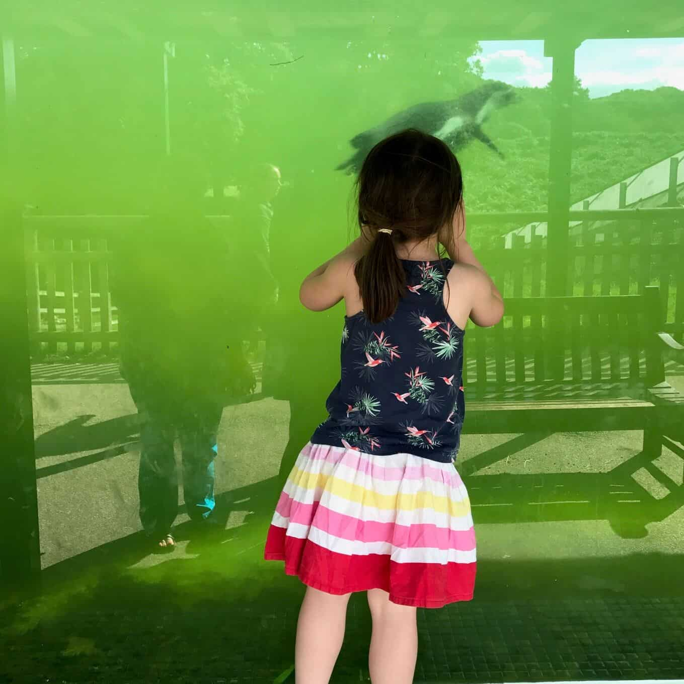 Thea watching penguins at Woburn Safari Park