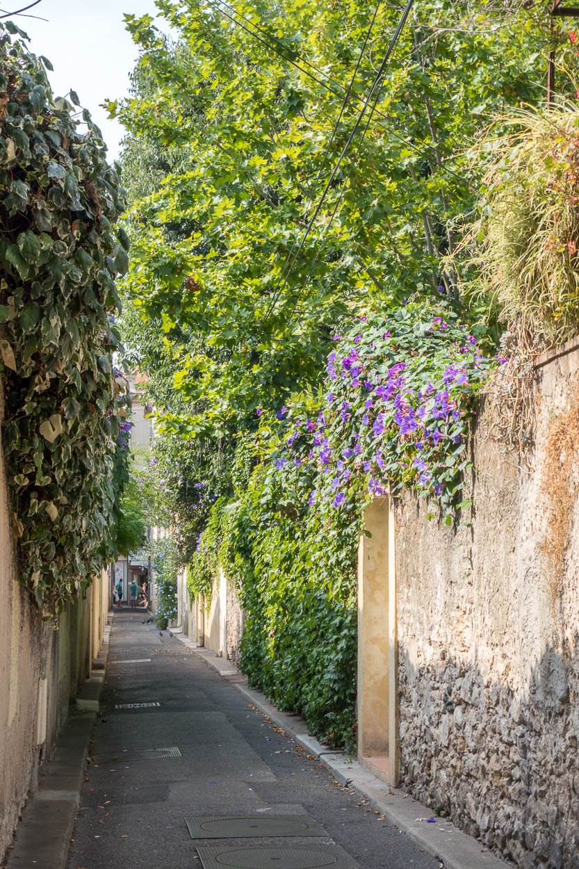 Pretty flowers tumbling over garden walls in old Antibes