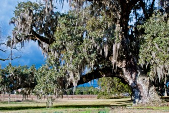A storm brews behind a Live Oak at McLeod Plantation in Charleston, SC.