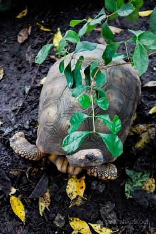 """Shy Turtle"" - National Aquarium in Baltimore, Maryland."