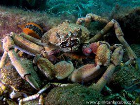 unattractive crab close up