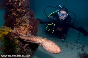 Andrew Schulze from London meets our favourite Flinders Octopus