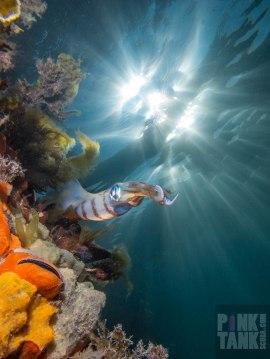 LOGO Calamari Against Pylon and Sun