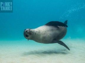 LOGO Sea Lion Side On