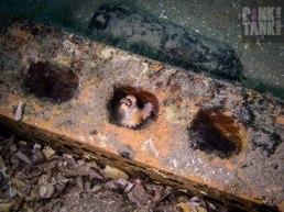 LOGO Tiny Octopus in Brick-13