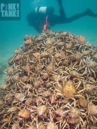 LOGO Spider Crab Pyramid