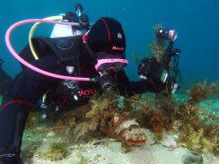 PT and cuttlefish by David Reinhard