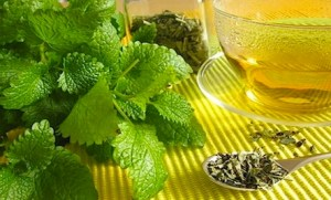 Lemon balm remedies for herpes