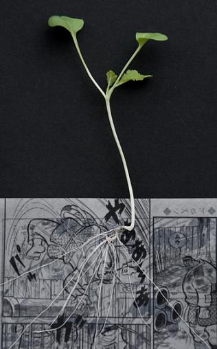 Manga Farming, by Koshi Kawachi --
