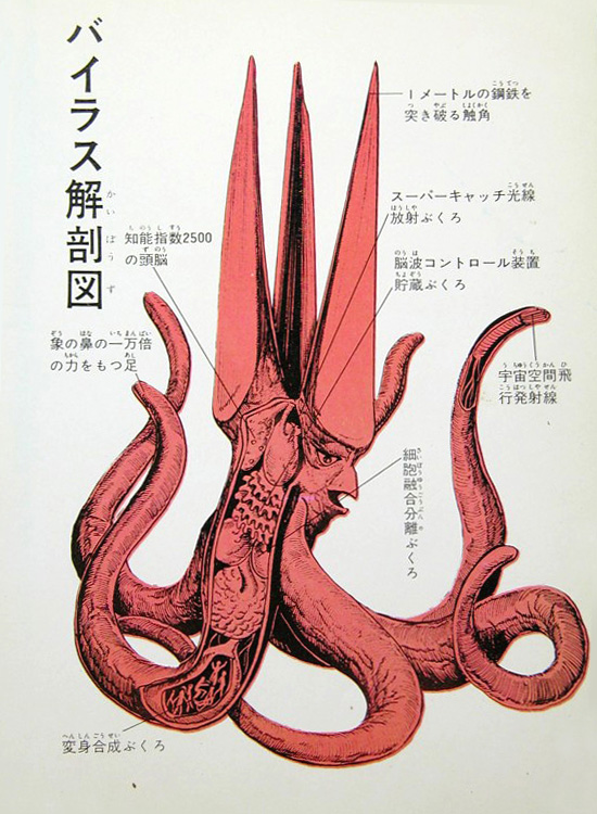 Viras anatomical illustration --