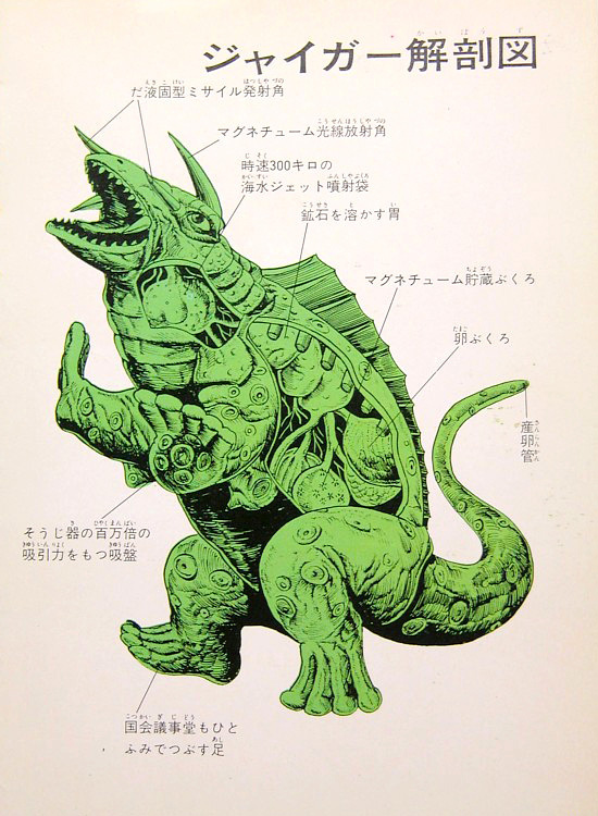 Jiger anatomical illustration --