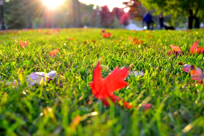 preparing-your-home-for-fall-fertilize-your-lawn