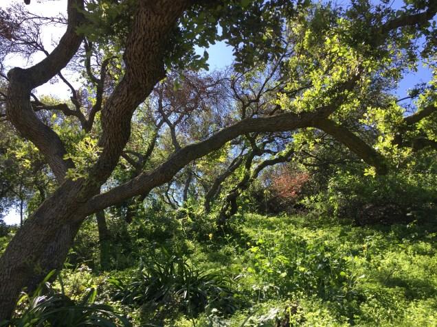 Spring in San Rafael Hills