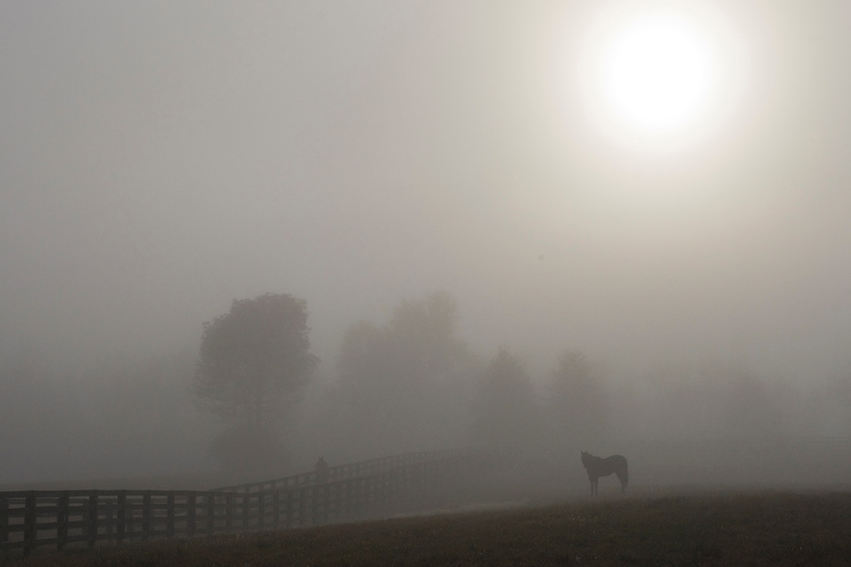Misty Moring