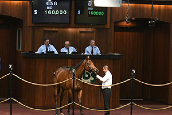 Third Leading Second Crop Sire at OBS April, With $160,000 Filly