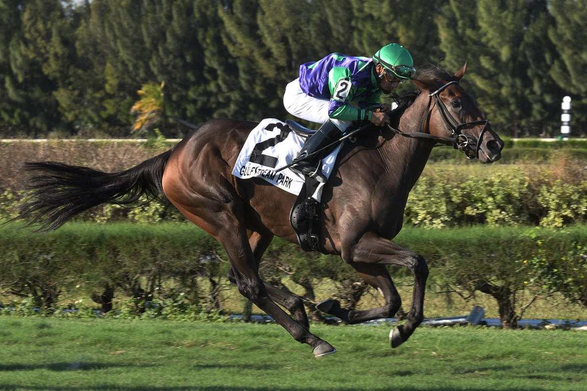 2YO VOW TO RECOVER Rallies to Place in Gulfstream's Wait a While S.