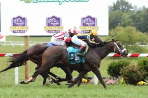 GSW of Six stakes races $803,9983